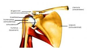 schoudergewricht voor schouderklachten